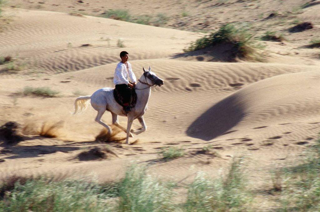 Ahal-Teke-Horse